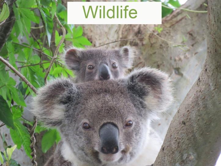 Aussie Wildlife