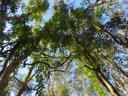 Cumbebin Wetland
