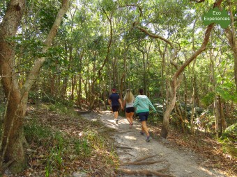 Walk anti closewise on the Cape Byron Track