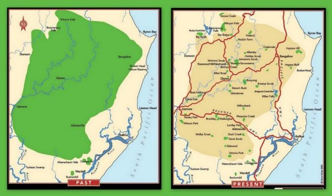 Big Scrub Rainforest Past and Present