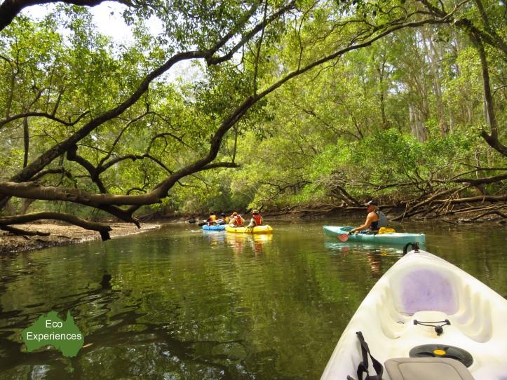 Kayaking in Minjungbul Creek