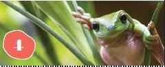 Rainforest Identification Walk