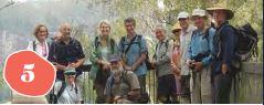 Bushwalk To 3 Waterfalls