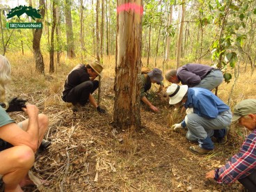 koala survey3